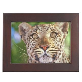 Africa, Botswana, Okvango Delta, wild leopard. Keepsake Box