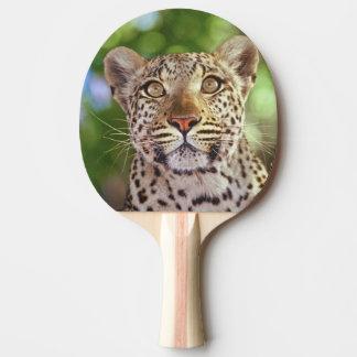 Africa, Botswana, Okvango Delta, wild leopard. Ping Pong Paddle