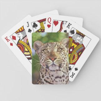 Africa, Botswana, Okvango Delta, wild leopard. Playing Cards