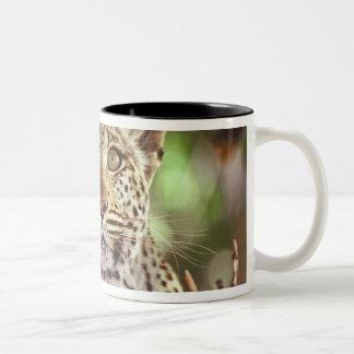 Africa, Botswana, Okvango Delta, wild leopard. Two-Tone Coffee Mug