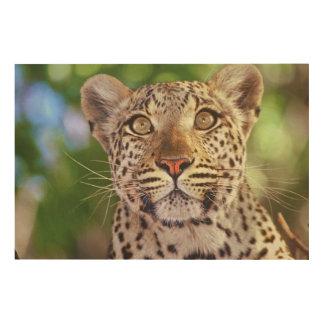 Africa, Botswana, Okvango Delta, wild leopard. Wood Canvases