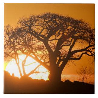 Africa, Botswana, Setting sun silhouettes Baobab Tile