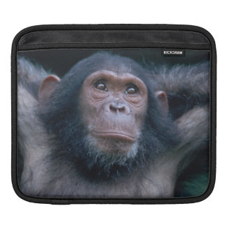 Africa, East Africa, Tanzania, Gombe National 2 iPad Sleeve