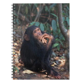 Africa, East Africa, Tanzania, Gombe National 2 Notebook