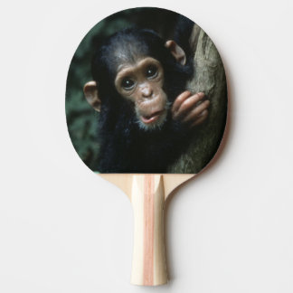 Africa, East Africa, Tanzania, Gombe National 2 Ping Pong Paddle