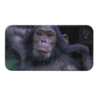 Africa, East Africa, Tanzania, Gombe National 3 iPhone 4 Cover