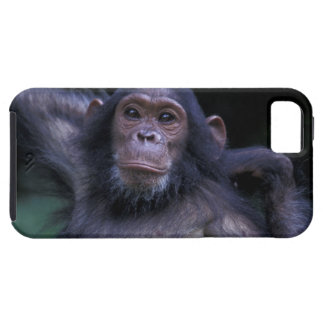 Africa, East Africa, Tanzania, Gombe National 3 Tough iPhone 5 Case