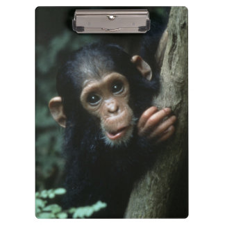 Africa, East Africa, Tanzania, Gombe National Clipboard