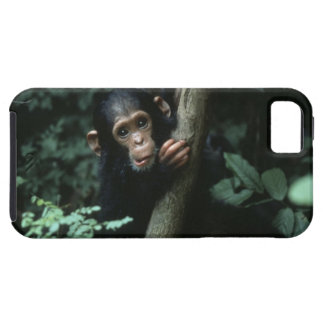 Africa, East Africa, Tanzania, Gombe National iPhone 5 Cover