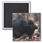 Africa, East Africa, Tanzania, Gombe National Fridge Magnets
