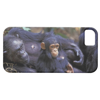 Africa, East Africa, Tanzania, Gombe NP Female Barely There iPhone 5 Case