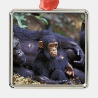 Africa, East Africa, Tanzania, Gombe NP Female Christmas Ornament