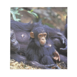 Africa, East Africa, Tanzania, Gombe NP Female Notepad