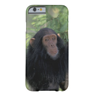 Africa, East Africa, Tanzania, Gombe NP Infant Barely There iPhone 6 Case