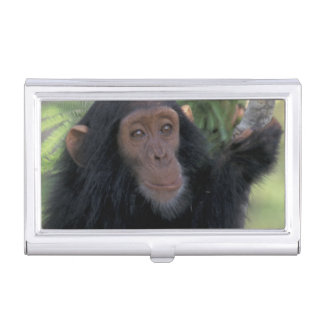 Africa, East Africa, Tanzania, Gombe NP Infant Business Card Holder