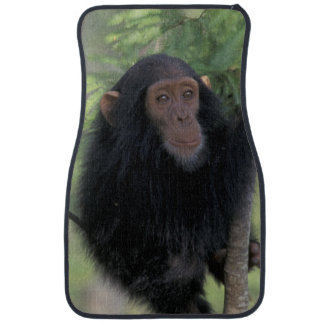 Africa, East Africa, Tanzania, Gombe NP Infant Car Mat