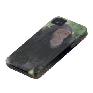 Africa, East Africa, Tanzania, Gombe NP Infant Case-Mate iPhone 4 Case