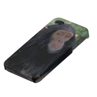 Africa, East Africa, Tanzania, Gombe NP Infant Cases For iPhone 4