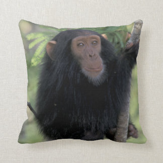 Africa, East Africa, Tanzania, Gombe NP Infant Cushion