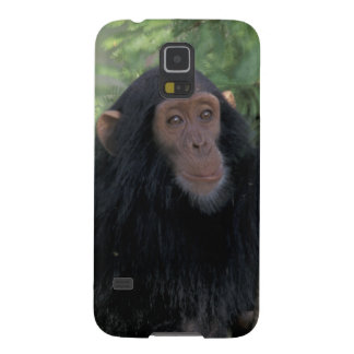 Africa, East Africa, Tanzania, Gombe NP Infant Galaxy S5 Covers