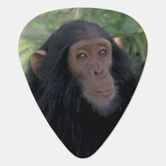Africa, East Africa, Tanzania, Gombe NP Infant Guitar Pick