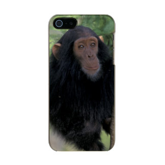 Africa, East Africa, Tanzania, Gombe NP Infant Incipio Feather® Shine iPhone 5 Case