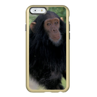Africa, East Africa, Tanzania, Gombe NP Infant Incipio Feather® Shine iPhone 6 Case