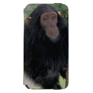 Africa, East Africa, Tanzania, Gombe NP Infant Incipio Watson™ iPhone 6 Wallet Case