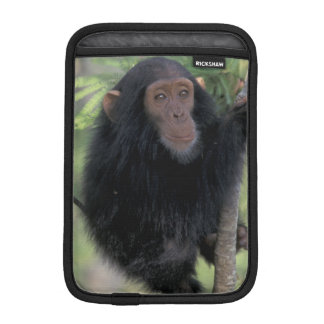 Africa, East Africa, Tanzania, Gombe NP Infant iPad Mini Sleeve