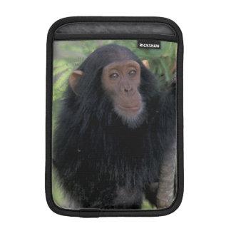 Africa, East Africa, Tanzania, Gombe NP Infant iPad Mini Sleeves