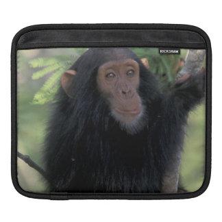 Africa, East Africa, Tanzania, Gombe NP Infant iPad Sleeve