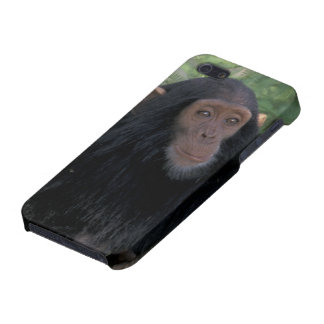 Africa, East Africa, Tanzania, Gombe NP Infant iPhone 5/5S Covers