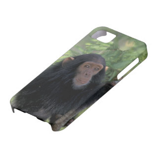 Africa, East Africa, Tanzania, Gombe NP Infant iPhone 5 Covers