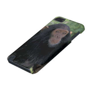 Africa, East Africa, Tanzania, Gombe NP Infant iPod Touch (5th Generation) Cases