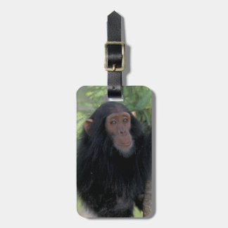 Africa, East Africa, Tanzania, Gombe NP Infant Luggage Tag