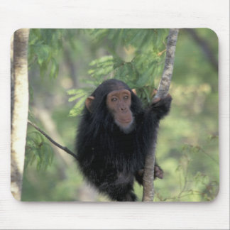 Africa, East Africa, Tanzania, Gombe NP Infant Mouse Pad