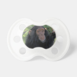 Africa, East Africa, Tanzania, Gombe NP Infant Pacifiers