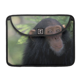 Africa, East Africa, Tanzania, Gombe NP Infant Sleeve For MacBooks