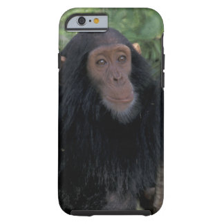 Africa, East Africa, Tanzania, Gombe NP Infant Tough iPhone 6 Case