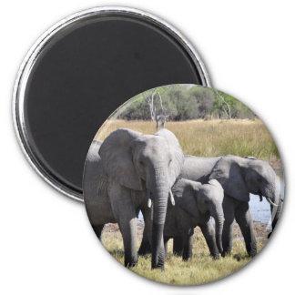 Africa Elephant Herds 6 Cm Round Magnet