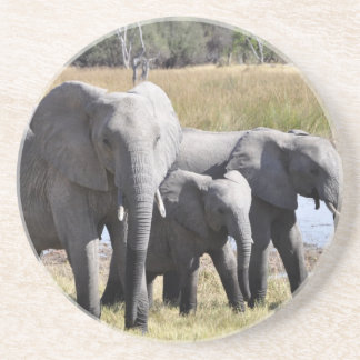 Africa Elephant Herds Coaster