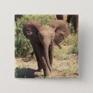Africa, Kenya, Amboseli National Park. African 2 15 Cm Square Badge