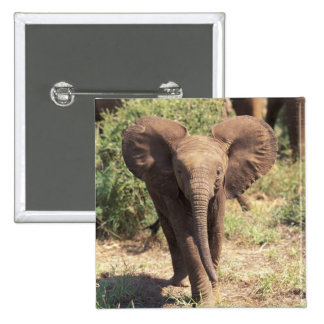 Africa, Kenya, Amboseli National Park. African 2 15 Cm Square Badge
