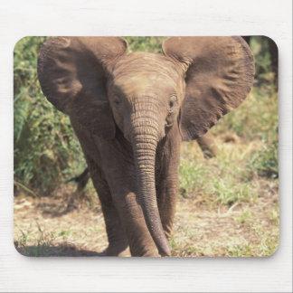 Africa, Kenya, Amboseli National Park. African 2 Mouse Pad