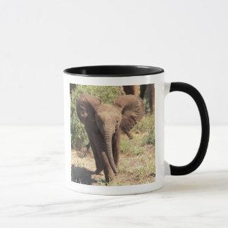 Africa, Kenya, Amboseli National Park. African 2 Mug