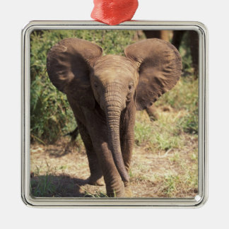 Africa, Kenya, Amboseli National Park. African 2 Silver-Colored Square Decoration