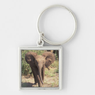 Africa, Kenya, Amboseli National Park. African 2 Silver-Colored Square Key Ring
