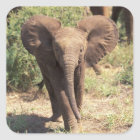 Africa, Kenya, Amboseli National Park. African 2 Square Sticker