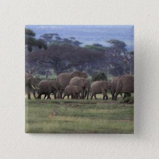 Africa, Kenya, Amboseli National Park. African 3 15 Cm Square Badge