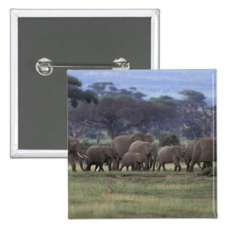 Africa, Kenya, Amboseli National Park. African 3 15 Cm Square Badge